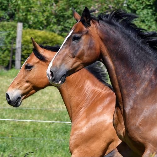 Beweging Paard Horsup Company