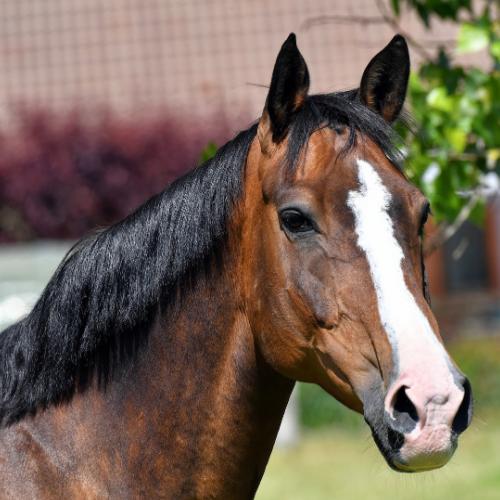 Detox Kuur paard Horsup Company