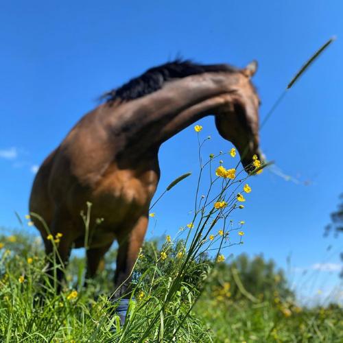 Spijsvertering Paard Horsup Company