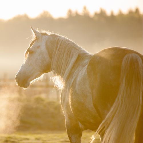 Weerstand ondersteuning supplement paard