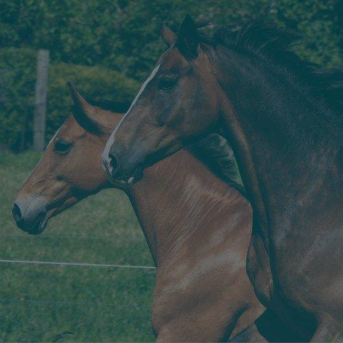 Beweging paard