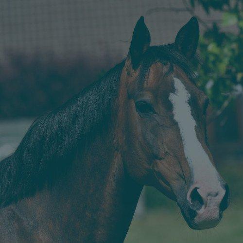 Detox paard