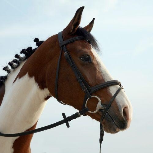 Verzorgingsproduct Paard Natuurlijk