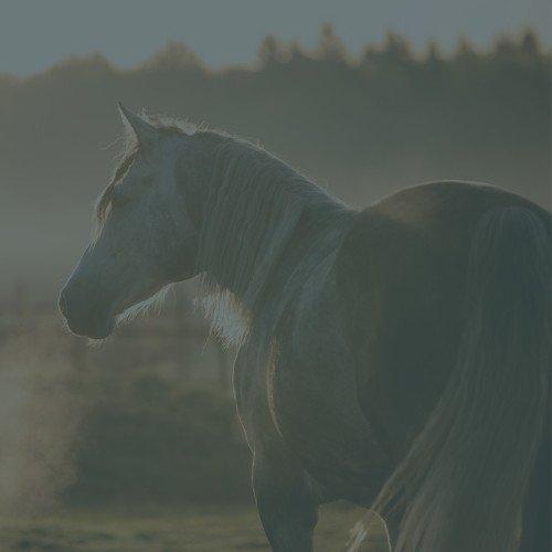 Weerstand paard