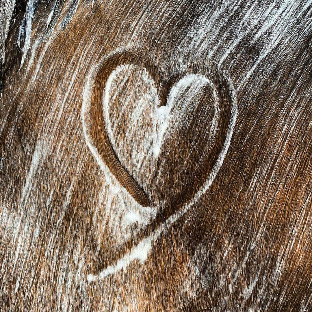 Schoon paard wash natuurlijk